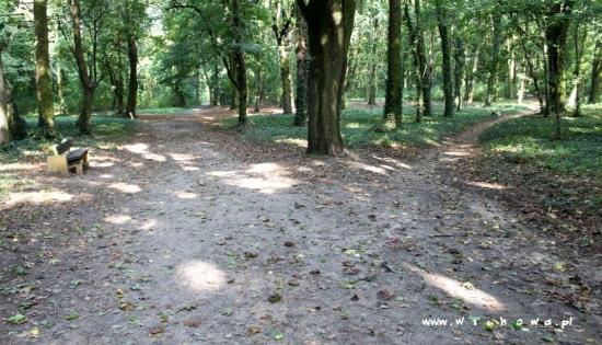 zdjęcie ścieżek w Parku Wolsztyńskim