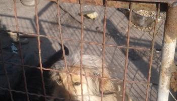 kontrola bytowania zwierząt