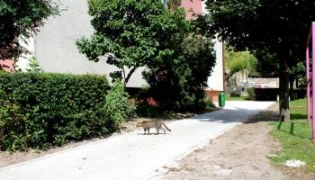 chodnik przy ulicy bocznej